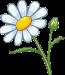 95500821-chamomile-cartoon-style
